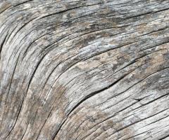 Driftwood grain, journal of wild culture, ©2018