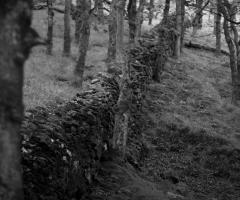 Liam woods 1180