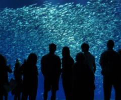Aquarium and people, Journal of Wild Culture, ©2017