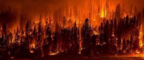 Conservation-wildfire-wildlife