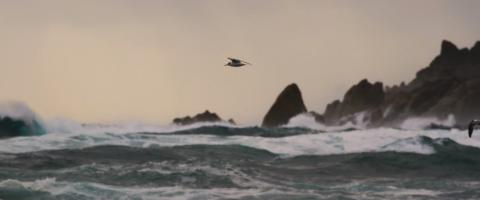 ocean birds, journal of wild culture, ©2018